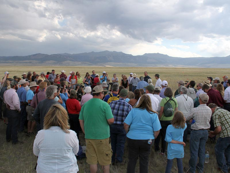 Crowd-Gathered-to-watch-Ferret-release-on-Pitchfork-and-Hogg-ranches-2017--Virginia-Moore