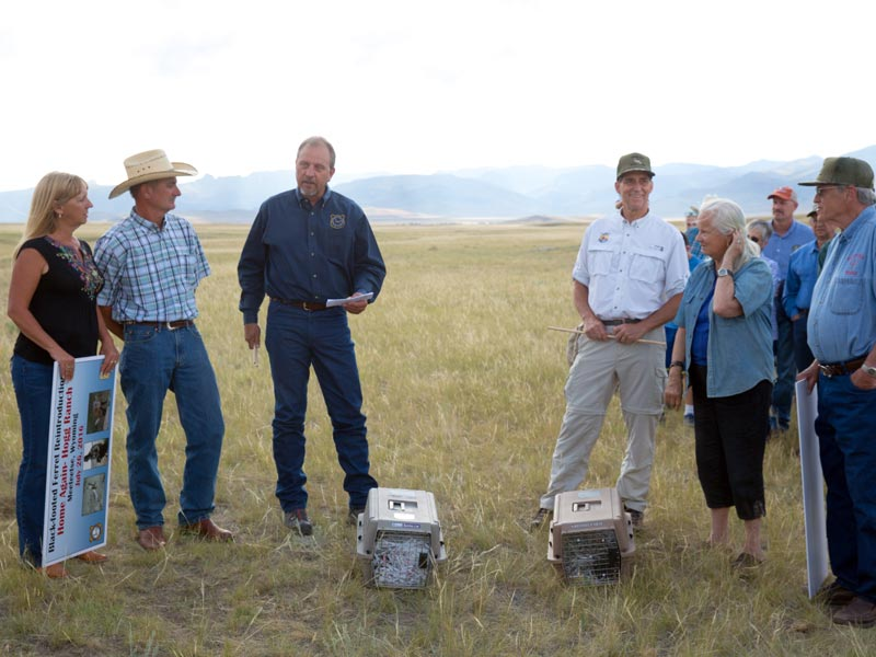 Hoggs-and-Bakers-Stand-with-WGFD-and-USFWS-Directors-before-Release--Louise-Johns