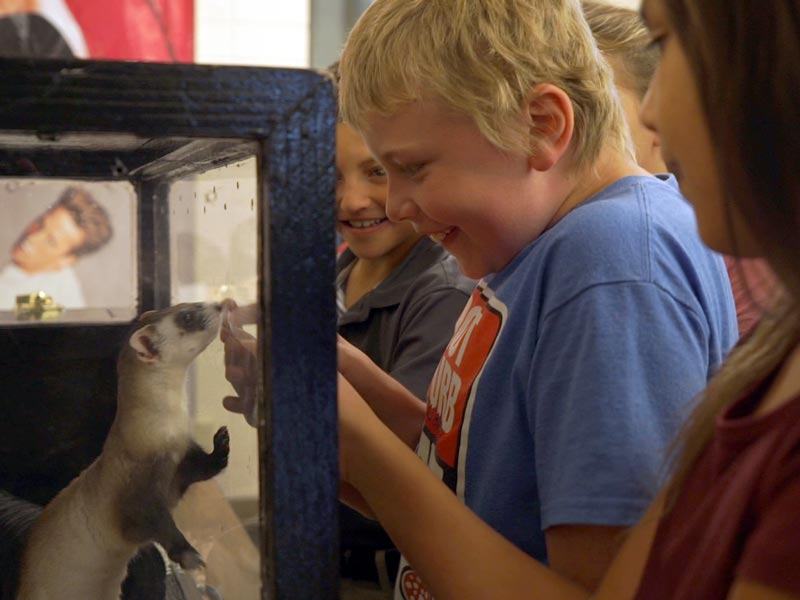 Student-at-Meeteetse-School-meets-a-captive-Ambassador-ferret-named-Two-Bit-during-presentation--Virginia-Moore